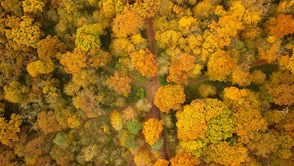 Forest of Saint-Germain-En-Laye, France
